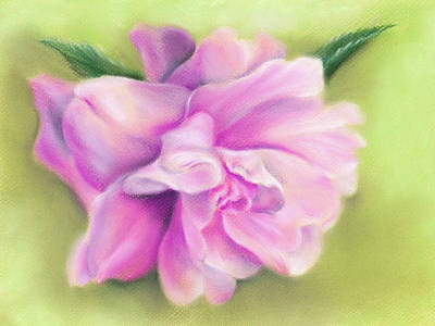 Pastel - Pink Camellia With Leaves by MM Anderson