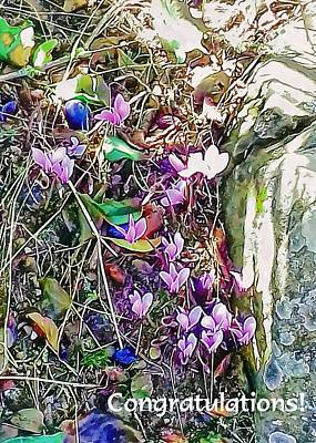 Mixed Media - Pink Cyclamen Congratulations by Dorothy Berry-Lound