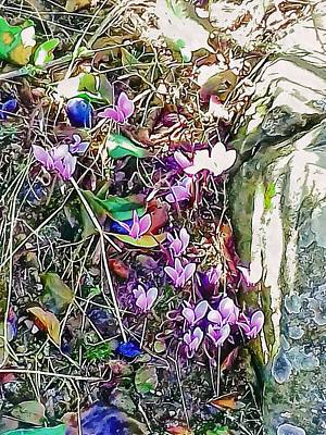 Photograph - Pink Cyclamen With Fallen Damsons by Dorothy Berry-Lound
