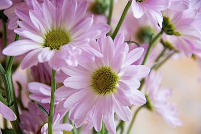 Photograph - Pink Daisies-1 by Jennifer Wick