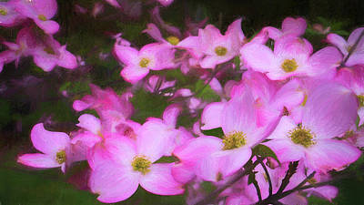 Digital Art - Pink Dogwood Flowers  by Jason Fink