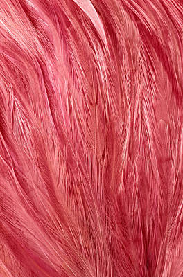 Photograph - Pink Feathers by Siede Preis