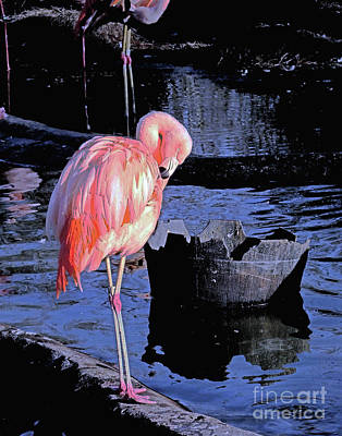 Photograph - Pink Flamingo15 At Memphis Zoo by Lizi Beard-Ward