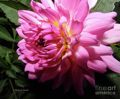 Photograph - Pink Flower No. 58 by Monica C Stovall