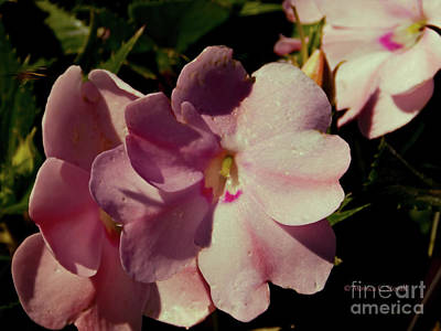 Photograph - Pink Flower No. 79 by Monica C Stovall