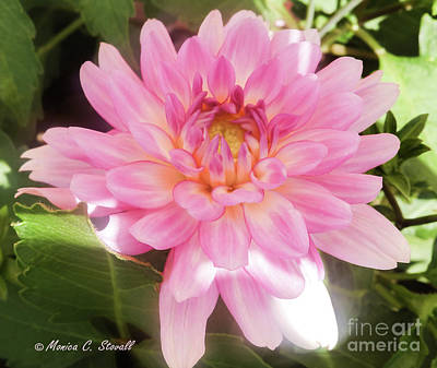 Photograph - Pink Flowers No. 37 by Monica C Stovall
