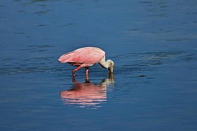 Photograph - Pink For A Drink by Michiale Schneider