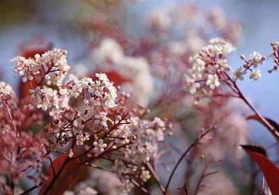 Photograph - Pink Fusion by Fraida Gutovich