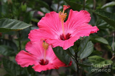 Lego Art - Pink Hibiscus by Dwight Cook
