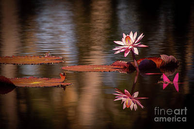 Photograph - Pink In The Morning Light by Sabrina L Ryan