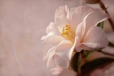 Photograph - Pink Japanese Camellia by Mary Jo Allen