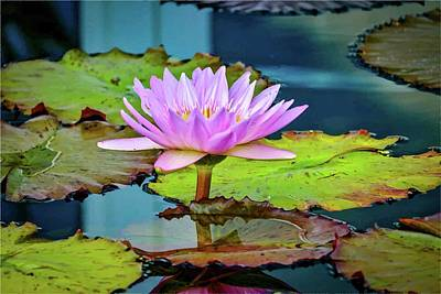 Photograph - Pink Lotus by Susan Rydberg