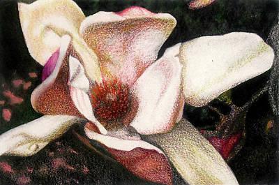 Mixed Media - Pink Magnolia by Ceilon Aspensen