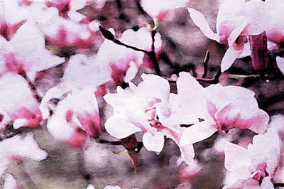 Mixed Media - Pink Magnolia In Watercolor by Susan Maxwell Schmidt