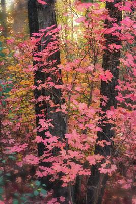 Photograph - Pink Maple Forest  by Saija Lehtonen