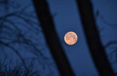 Photograph - Pink Moon by Carl Young