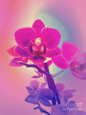 Digital Art - Pink Orchid  by Rachel Hannah
