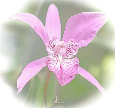 Digital Art - Pink Orchid by Silvia Marcoschamer
