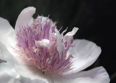 Photograph - Pink Pastel Petals by Traci Asaurus