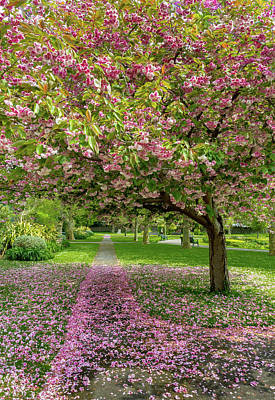 Wall Art - Photograph - Pink Petals On The Path by Roslyn Wilkins