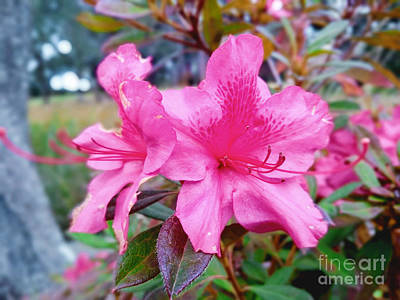 Photograph - Pink by Robert Knight