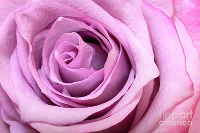 Photograph - Pink Rose by Brian Jannsen