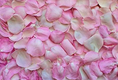 Photograph - Pink Rose Petals by Top Wallpapers