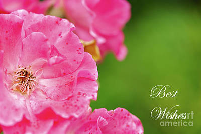 Royalty-Free and Rights-Managed Images - Pink Roses Best Wishes by DiFigiano Photography