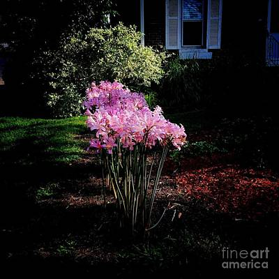 Frank J Casella Royalty-Free and Rights-Managed Images - Pink Sunlit Flowers in the Neighborhood by Frank J Casella