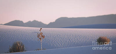 Photograph - Pink Sunset At White Sands by Doug Sturgess