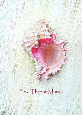 Photograph - Pink Throat Murex II by Kathi Mirto