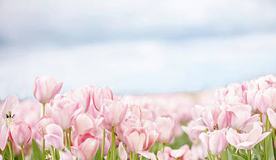 Photograph - Pink Tulips In Field by Rebecca Cozart