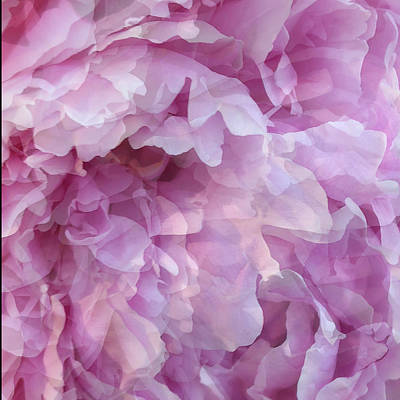 Peony Digital Art - Pinkity by Cindy Greenstein