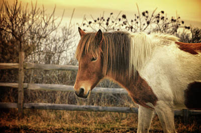 Photograph - Pinto Mare In Autumn  by Tikvah's Hope