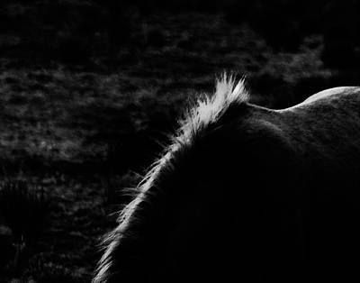 Photograph - Placitas 44 by Catherine Sobredo