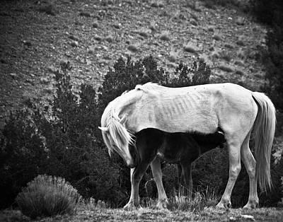 Photograph - Placitas 45 by Catherine Sobredo
