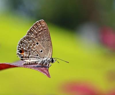 Photograph - Plains Cupid by Ajay R