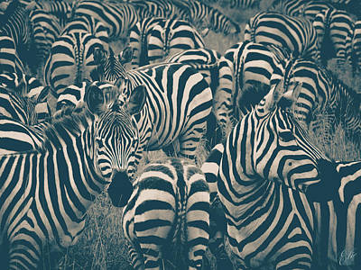 Fruits And Vegetables Still Life - Plains Zebra Serengeti by Elie Wolf