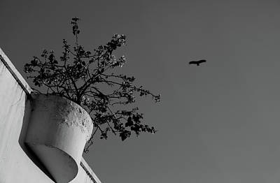 Photograph - Plant Versus Flying Bird by Prakash Ghai