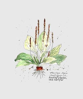 Grimm Fairy Tales - Plantago Major by Petra Stephens