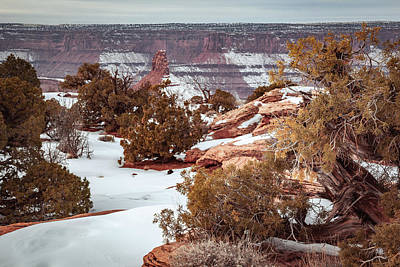 Photograph - Plants And Rock Formations At Dead Horse Point by Jeanette Fellows