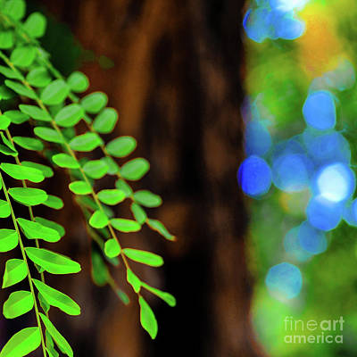 Photograph - Plants, Trees And Flowers by D Davila