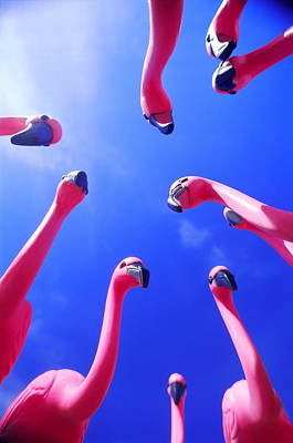 Photograph - Plastic Pink Flamingoes, Low Angle View by Paul Stover