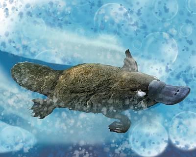 Girl Wall Art - Digital Art - Platypus Bubbles by Joan Stratton