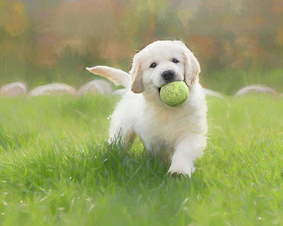 Photograph - Play Ball by Jennifer Grossnickle