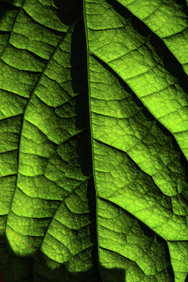 Photograph - Play Of Light And Shadow. Green Leaf Macro 11 by Jenny Rainbow