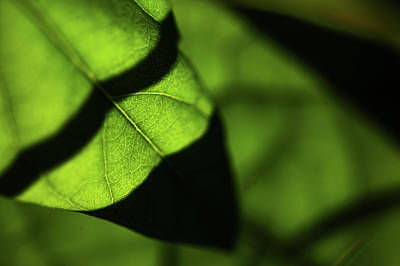 Photograph - Play Of Light And Shadow. Green Leaf Macro 13 by Jenny Rainbow