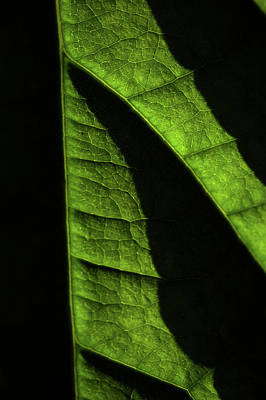 Photograph - Play Of Light And Shadow. Green Leaf Macro 9 by Jenny Rainbow