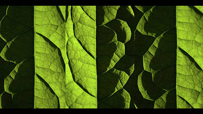 Photograph - Play Of Light And Shadow Triptych  by Jenny Rainbow