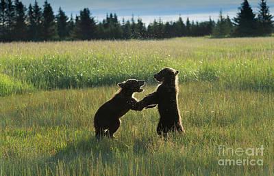 Photograph - Playtime by Sandra Bronstein